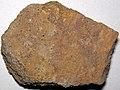 Sandstone (Allensville Member, Logan Formation, Lower Mississippian; Sugar Loaf Hill, Granville, Ohio, USA) 1 (46849500341).jpg