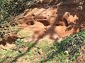 Sandstone Rock, Ludstone, Shropshire - geograph.org.uk - 378991.jpg
