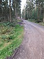 Segeberger Forst 18.jpg