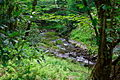 Seneca-Creek ForestWander.JPG