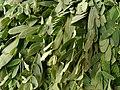 Sesbania grandiflora of Marutamalai.jpg