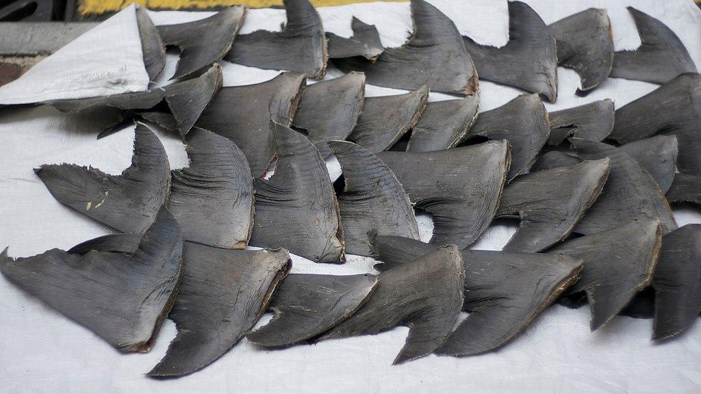 Shark fins Hong Kong