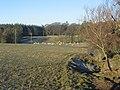 Sheep, Middleton. - geograph.org.uk - 115469.jpg