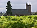 Sheep at St Mary's, Stapleton - geograph.org.uk - 572676.jpg