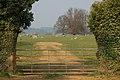 Sheep grazing in Great Tew Park - geograph.org.uk - 385673.jpg