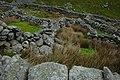 Sheepfold beside Afon Goch - geograph.org.uk - 832559.jpg