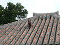 Shisa on the roof.jpg