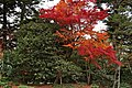 Shugakuin villa (4194488940).jpg
