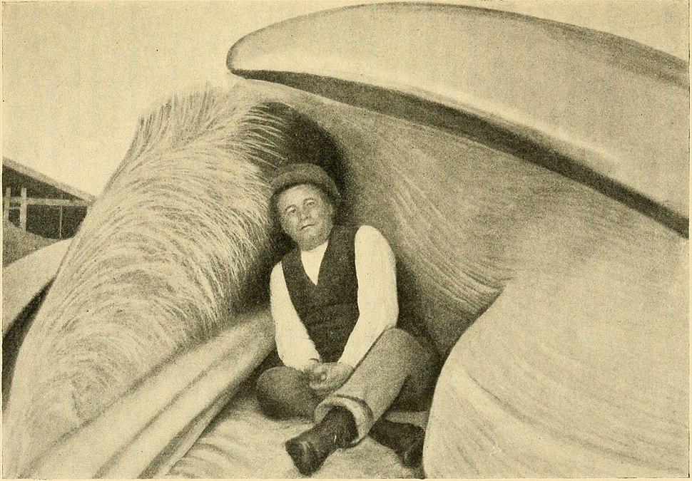 Sigurd Risting in a gap of a fin whale 1912