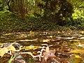 Simeria Dendrological park - surface of the lake - panoramio.jpg