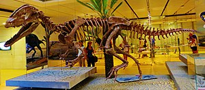Dilophosaurus - Reconstructed skeleton of Sinosaurus sinensis, which was originally described as a species of Dilophosaurus