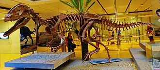 Dilophosaurus - Reconstructed skeleton of Sinosaurus sinensis, which was originally described as a species of Dilophosaurus