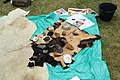 Site préhistorique d'Etiolles le 20 juin 2015 - 113.jpg