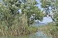 Skadar Lake, Montenegro 34.jpg