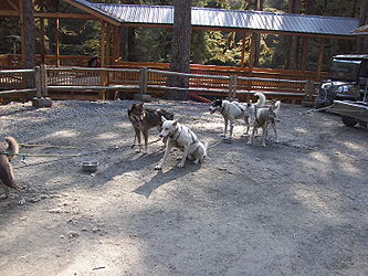 Sled Dog Discovery & Musher's Camp 8.jpg