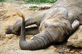 Slon zoo zlín.jpg