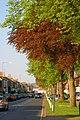 South Parade - geograph.org.uk - 798131.jpg