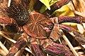 Spider (15372569664).jpg
