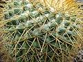 Spiky cactus - geograph.org.uk - 995727.jpg