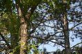 Spomen park Bubanj - Niš 22.jpg