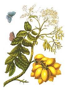 Plantas Medicinales Para Cancer