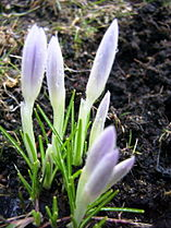 Spring 2005.jpg