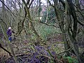 Spring below Foxhall, Castlemorton Common - geograph.org.uk - 1091131.jpg