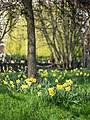 Springtime in the park (6866366822).jpg