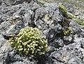 St. Moritz Hike-45 (9709750596).jpg