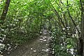Stane Street, Tyrrell's Wood.jpg