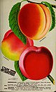 Stark fruits (1896) (20518365636).jpg