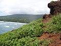 Starr-050405-5764-Solanum americanum-habit-Alau-Maui (24447247010).jpg