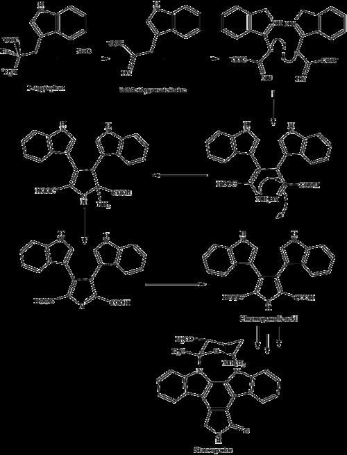 Staurosporine 2