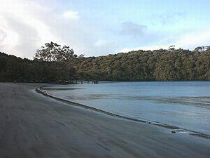 Rakiura National Park - Near Port William Hut, North Coast