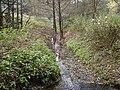 Stukenbrock-krampsbach01.jpg