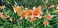 Summer's Flowers - Flickr - SurFeRGiRL30.jpg
