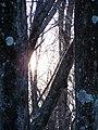 Sunshine PB230070.jpg
