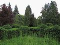 Syretsky arboretum 7.JPG