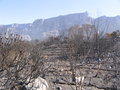 TableMountainBurning2006-devastation.jpg