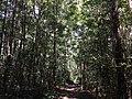 Tangkiling Nature 08.jpg