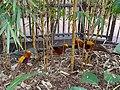 Taronga Zoo (6182521504).jpg