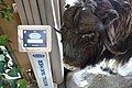 """Taxidermied muskox (Ovibos moschatus). Quality Hotel Skifer, Oppdal, Norway. Also ordering automat for local taxi (""""Trøndertaxi""""). Photo 2019-03-19.jpg"""