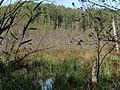 Teufelsbruch swamp next to crossing path in autumn.jpg