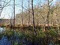 Teufelsbruch swamp next to crossing path in autumn 15.jpg