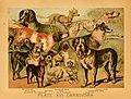 The animal kingdom (Plate XVIII) (6130246024).jpg