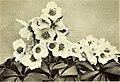 The book of the winter garden (1906) (20406157541).jpg