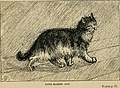 The cat - its natural history; domestic varieties; management and treatment (with illustrations) (1887) (20592801751).jpg