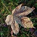 The fallen of fall - Flickr - Stiller Beobachter (2).jpg