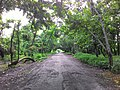 The road covered with a nature (1).jpg