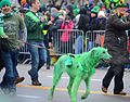 This Hound is more Irish than Wolf. (8569927969).jpg